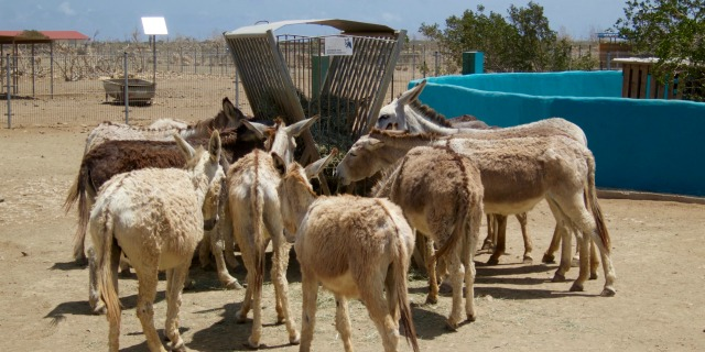 Our Top 10 List Villa Lunt Bonaire vacation rental donkey sanctuary