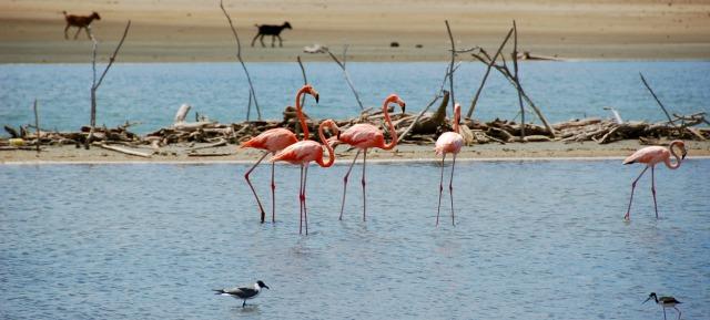 Our Top 10 List Villa Lunt Bonaire vacation rental flamingos
