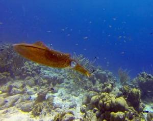 scuba-diving-pic