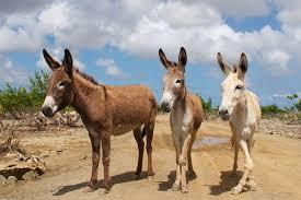 The Donkey Sanctuary on Bonaire