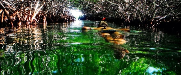 Kayak The Mangrove on Bonaire