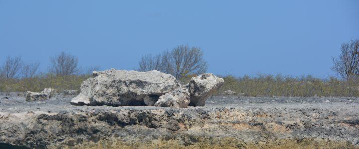 Klein Bonaire Rock Turtle