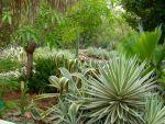 Lush tropical gardens around Villa Lunt.