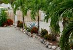 Palm tree lined driveway in galleries