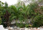 Beautiful tropical gardens surround Villa Lunt.